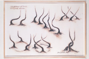 Six Groups of Larch, 1990<BR>