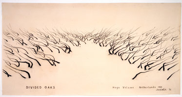 Divided Oaks, 1992<BR>