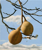 Buckeye Seed Pods, 2004<br>