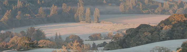 Heavy Frost at Sunrise, 2006 <br>