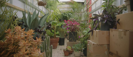 Alison O'Daniel<br>