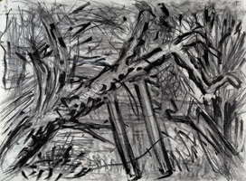 Cherry Tree, Autumn, 2002<br>