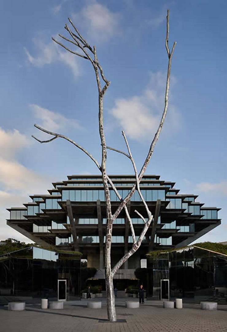 Allen-UCSD-tree-1