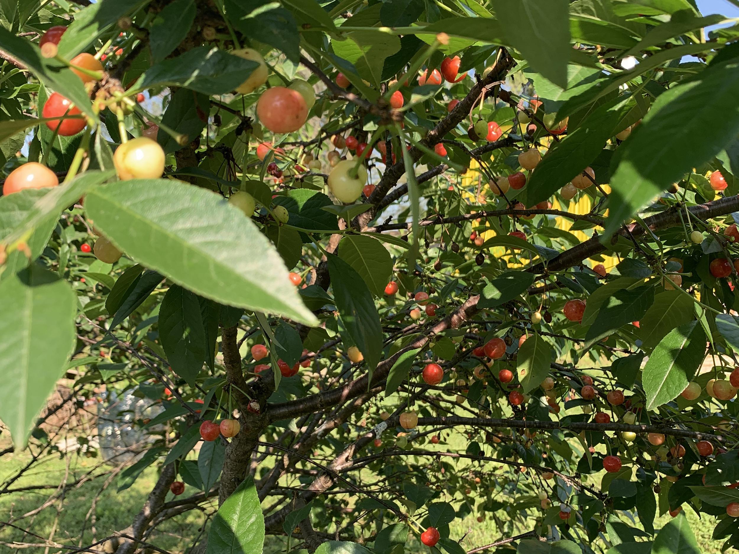 Matt-Wedel-Garden-Pictures2-1