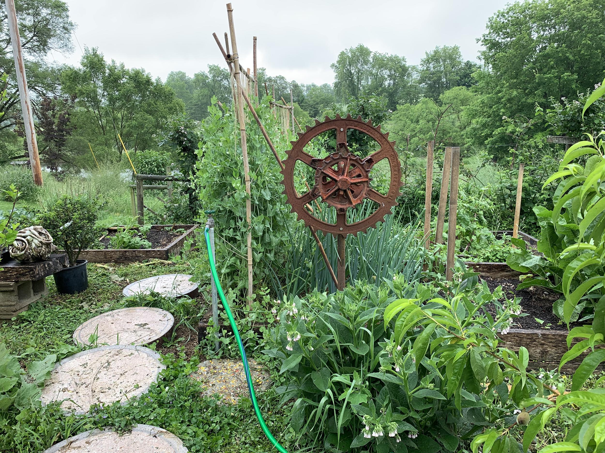 Matt-Wedel-Garden-Pictures6
