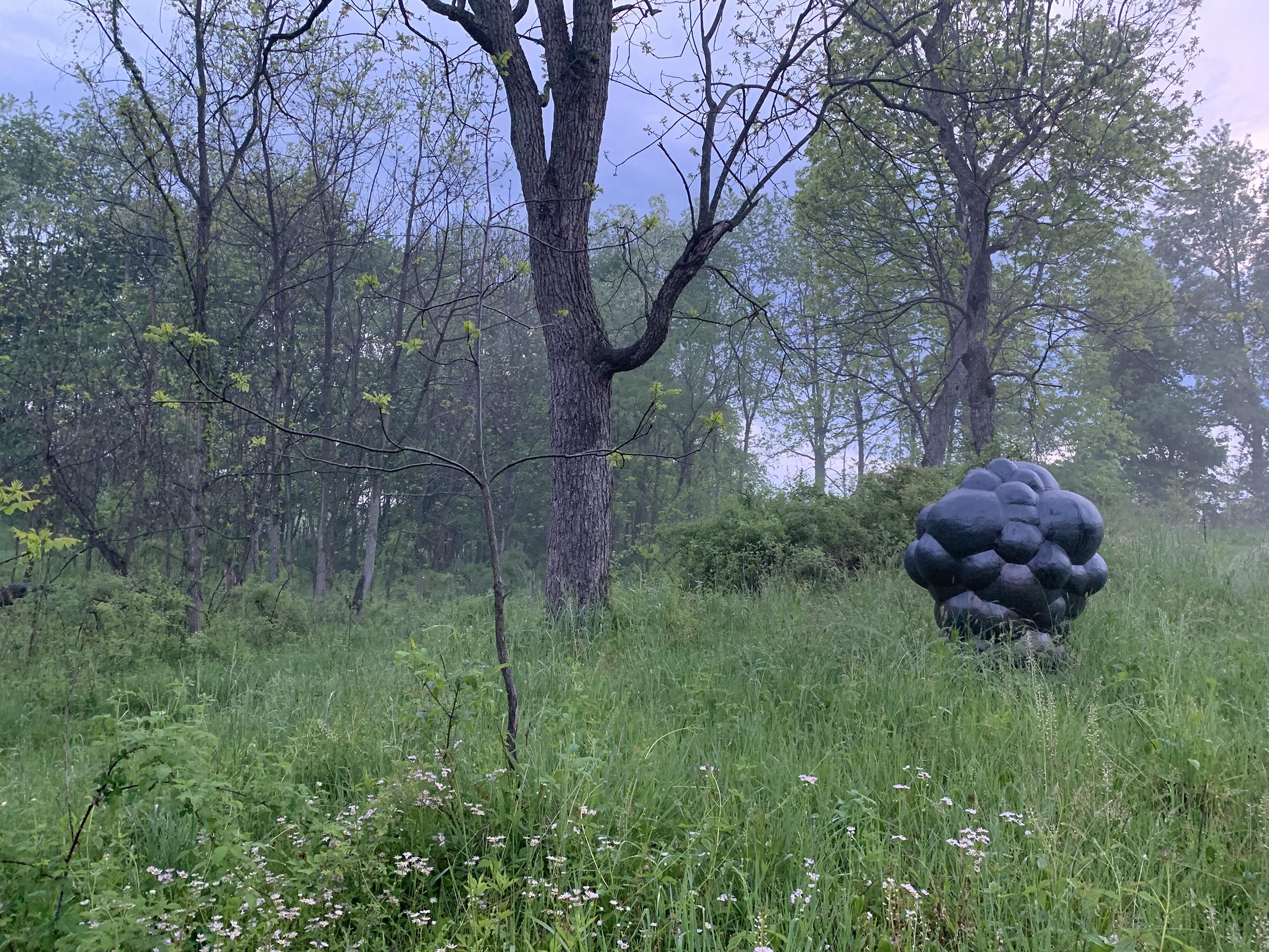 Matt-Wedel-Garden-Pictures8